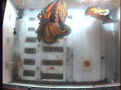 Monarch1-Flt_Whole 2009-12-08_03-36-03