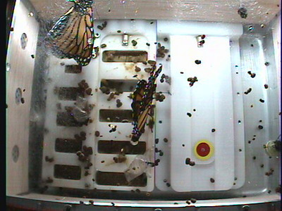 Monarch1-Flt_Whole 2009-12-03_20-43-17
