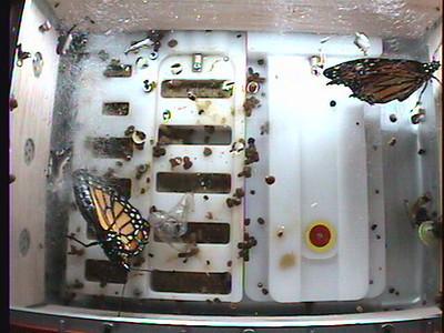 Monarch1-Flt_Whole 2009-12-04_01-11-34