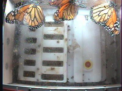 Monarch1-Flt_Whole 2009-12-06_03-25-19