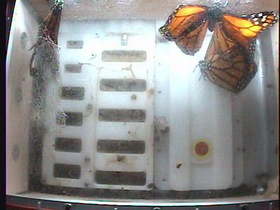Monarch1-Flt_Whole 2009-12-07_23-49-19