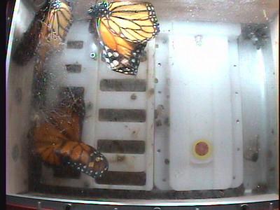 Monarch1-Flt_Whole 2009-12-06_23-39-03