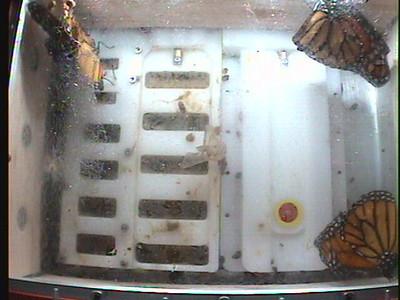 Monarch1-Flt_Whole 2009-12-06_19-10-52