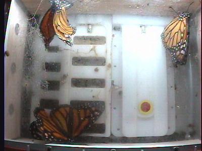 Monarch1-Flt_Whole 2009-12-07_05-39-54