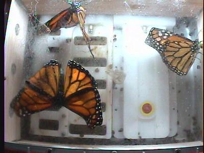 Monarch1-Flt_Whole 2009-12-06_04-37-29