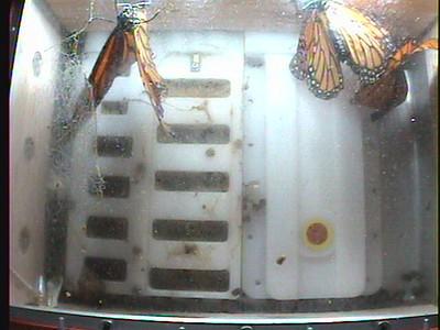 Monarch1-Flt_Whole 2009-12-07_22-37-08