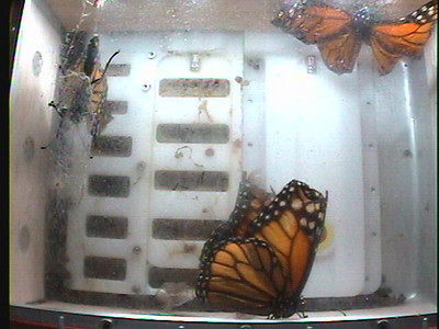 Monarch1-Flt_Whole 2009-12-08_06-20-58