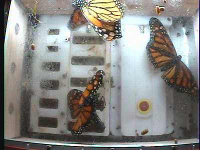 Monarch1-Flt_Whole 2009-12-06_04-06-34