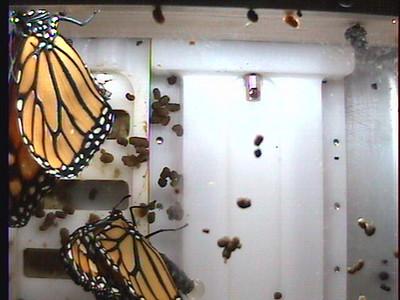 Monarch1-Flt_Whole 2009-12-03_20-22-36