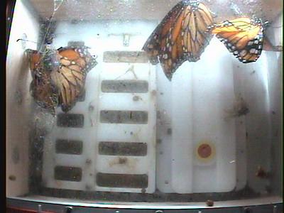 Monarch1-Flt_Whole 2009-12-08_02-54-52