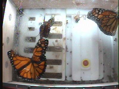 Monarch1-Flt_Whole 2009-12-06_05-39-22