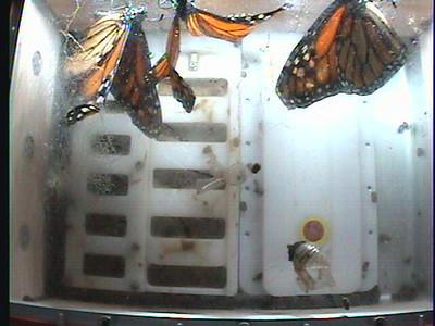 Monarch1-Flt_Whole 2009-12-06_22-37-10