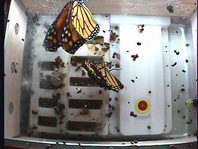 Monarch1-Flt_Whole 2009-12-03_20-22-42