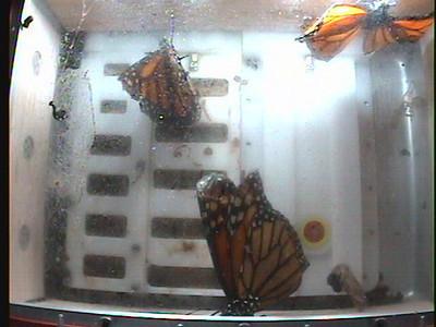 Monarch1-Flt_Whole 2009-12-08_04-48-11