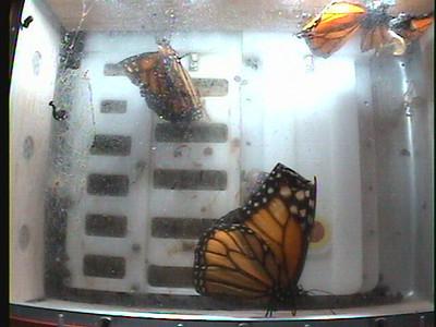 Monarch1-Flt_Whole 2009-12-08_04-58-30