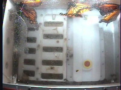 Monarch1-Flt_Whole 2009-12-07_22-06-13