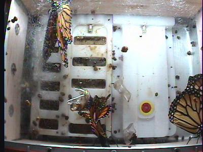 Monarch1-Flt_Whole 2009-12-05_00-39-59