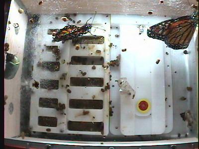 Monarch1-Flt_Whole 2009-12-04_04-27-30