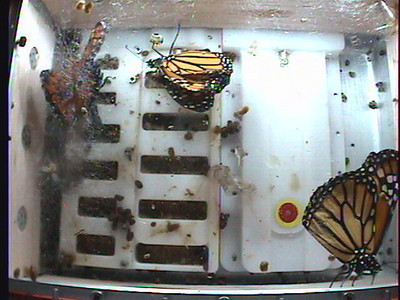 Monarch1-Flt_Whole 2009-12-04_22-36-24