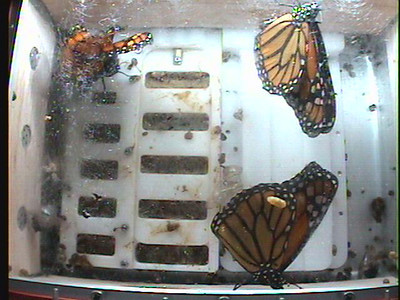 Monarch1-Flt_Whole 2009-12-05_05-18-01