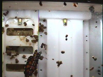 Monarch1-Flt_Whole 2009-12-03_20-43-11