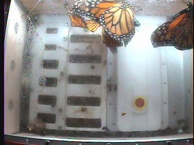 Monarch1-Flt_Whole 2009-12-07_21-04-24