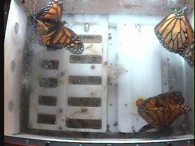 Monarch1-Flt_Whole 2009-12-06_19-41-45