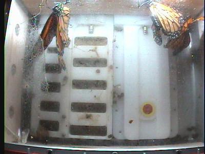 Monarch1-Flt_Whole 2009-12-07_22-57-46