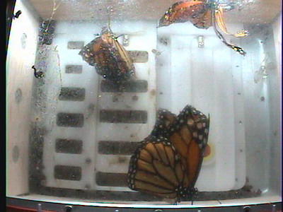 Monarch1-Flt_Whole 2009-12-08_05-19-07