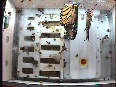 Monarch1-Flt_Whole 2009-12-04_05-39-30