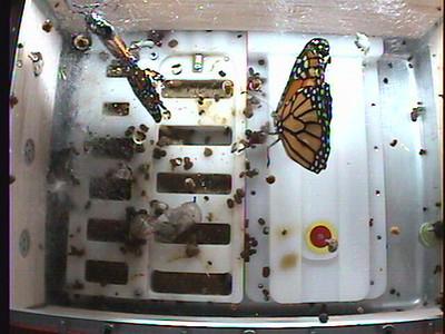 Monarch1-Flt_Whole 2009-12-04_02-13-34