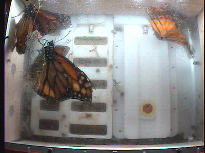 Monarch1-Flt_Whole 2009-12-08_02-13-40