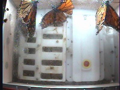 Monarch1-Flt_Whole 2009-12-07_03-36-10