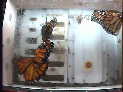 Monarch1-Flt_Whole 2009-12-06_05-49-41