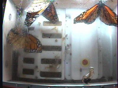 Monarch1-Flt_Whole 2009-12-07_01-32-25