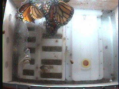 Monarch1-Flt_Whole 2009-12-07_03-56-49