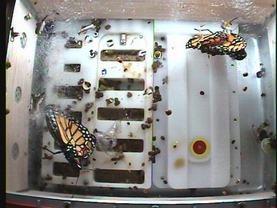 Monarch1-Flt_Whole 2009-12-04_00-50-58