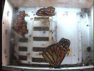 Monarch1-Flt_Whole 2009-12-05_06-40-27