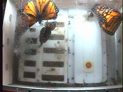 Monarch1-Flt_Whole 2009-12-06_05-08-26