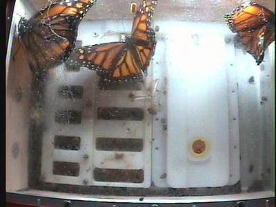 Monarch1-Flt_Whole 2009-12-06_21-04-22