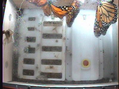 Monarch1-Flt_Whole 2009-12-07_04-27-45