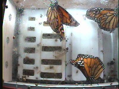 Monarch1-Flt_Whole 2009-12-05_21-04-01