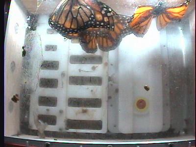 Monarch1-Flt_Whole 2009-12-08_03-25-46