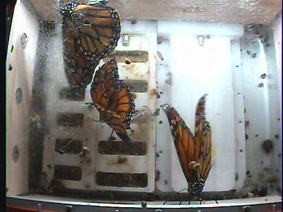 Monarch1-Flt_Whole 2009-12-05_04-26-30