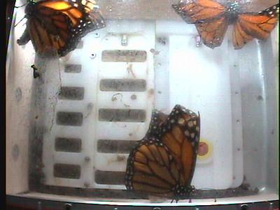 Monarch1-Flt_Whole 2009-12-08_05-39-45