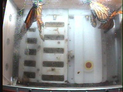 Monarch1-Flt_Whole 2009-12-07_22-47-27