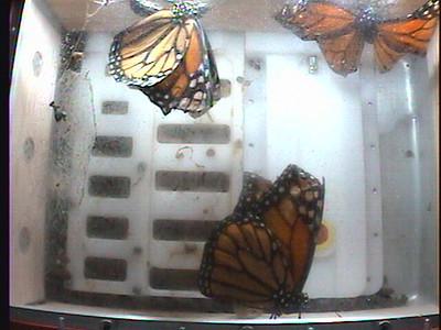Monarch1-Flt_Whole 2009-12-08_05-50-04