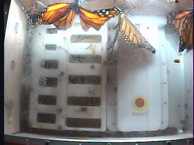 Monarch1-Flt_Whole 2009-12-07_02-44-37