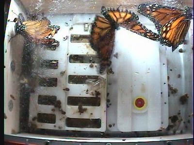 Monarch1-Flt_Whole 2009-12-05_00-29-41