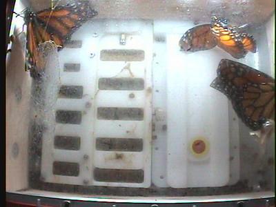 Monarch1-Flt_Whole 2009-12-08_01-52-57